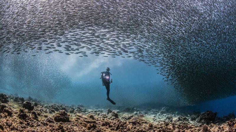 bahia-ballena-scuba