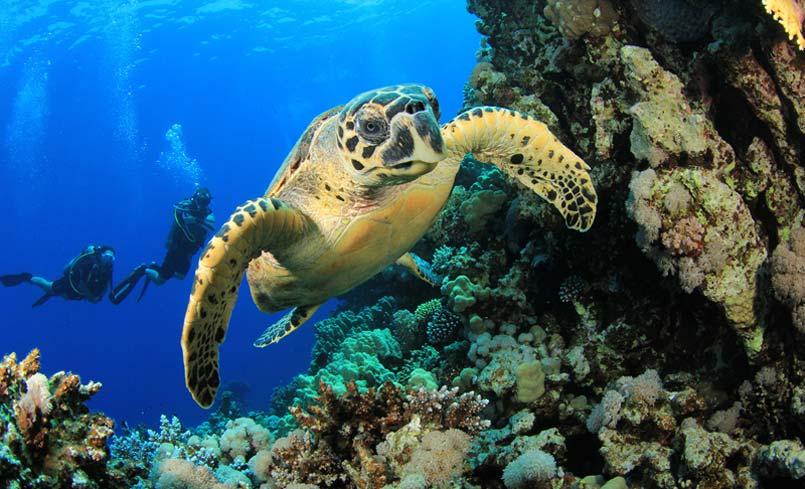 diving-uvita-costa-rica