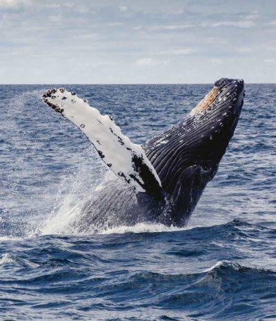 whale watching tour uvita costa rica