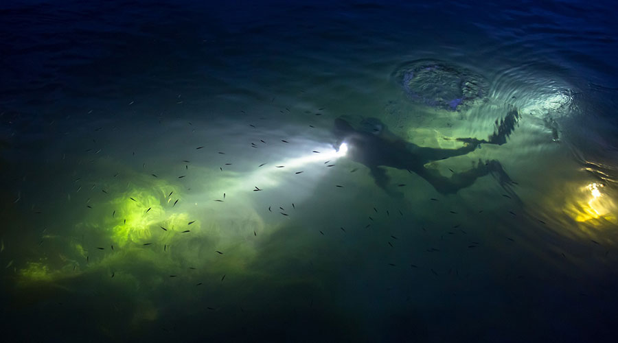 night-diving-everything-you-need-to-know