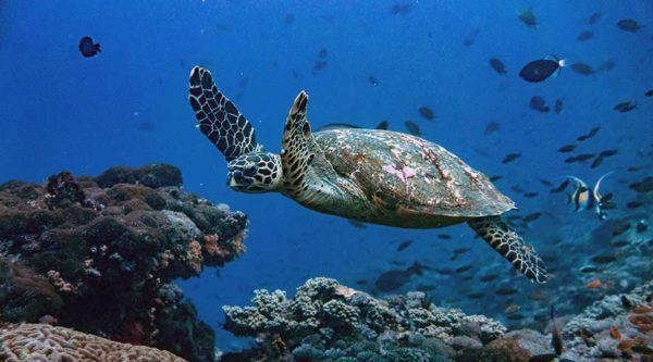 kurs nurkowania z akwalungiem w kostaryce
