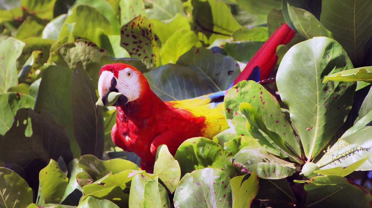costa-rica-information-fauna-flora