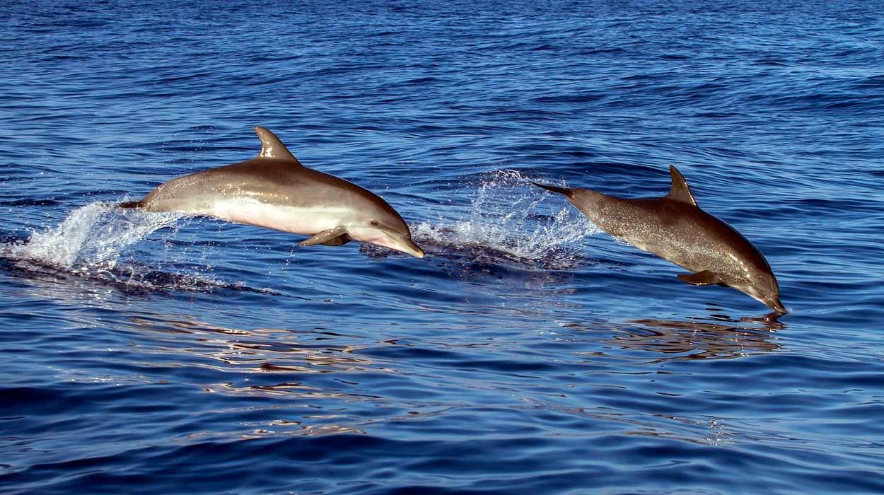Delfines en Costa Rica