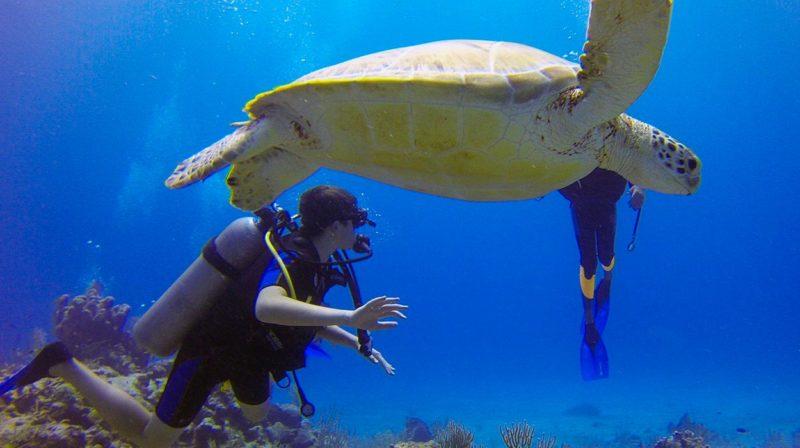 buceo-en-costa-rica-isla-del-cano