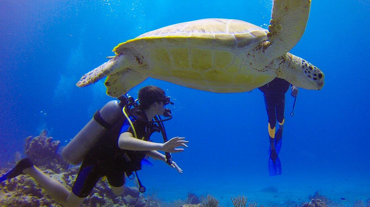 scuba-diving-in-costa-rica-isla-del-cano