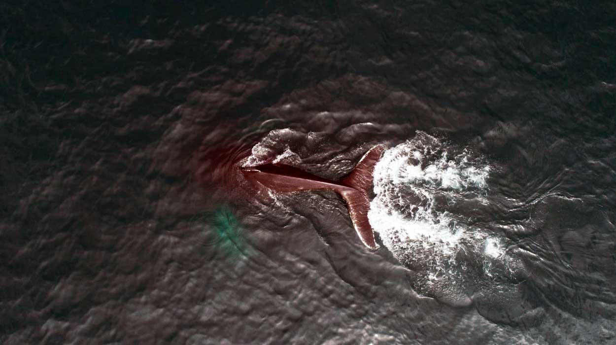 Avistamiento de ballenas en Costa Rica