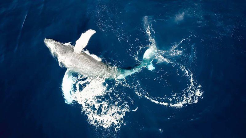 whale-watching-marino-ballena-snorkeling-trip-uvita